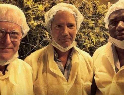 UK politicians investigate Canada's legal cannabis industry