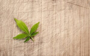 Cannabis leaf on a sheet (CBD ingredient)