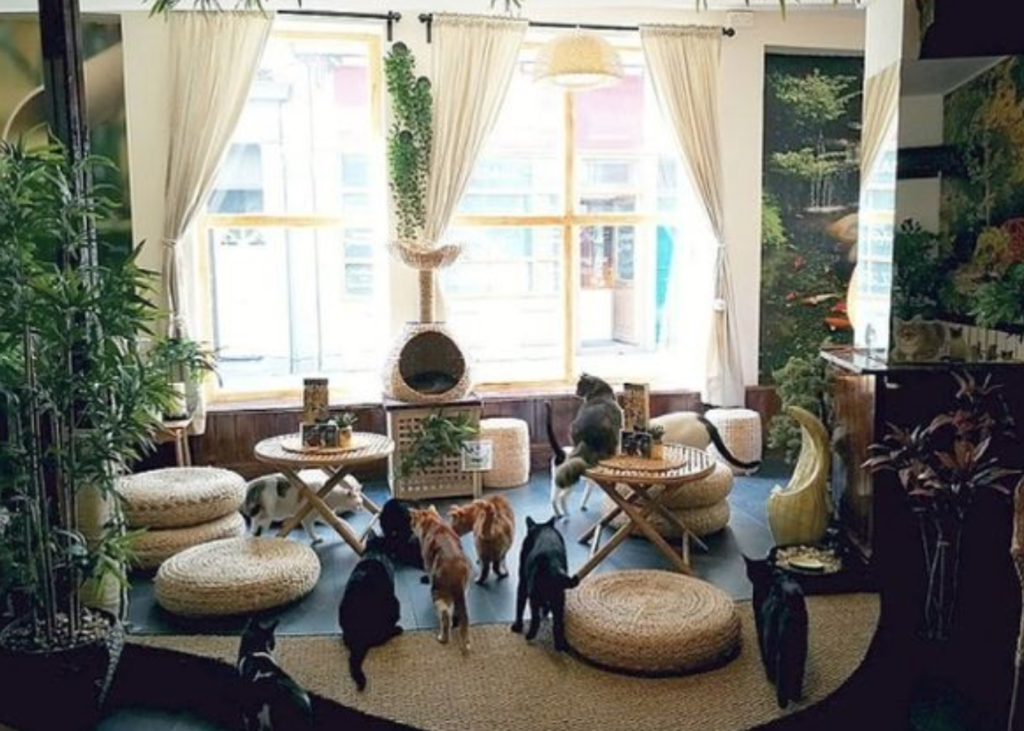 A shot of a cafe filled with cats and plants.