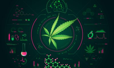 Cannabis leaf on digital background design