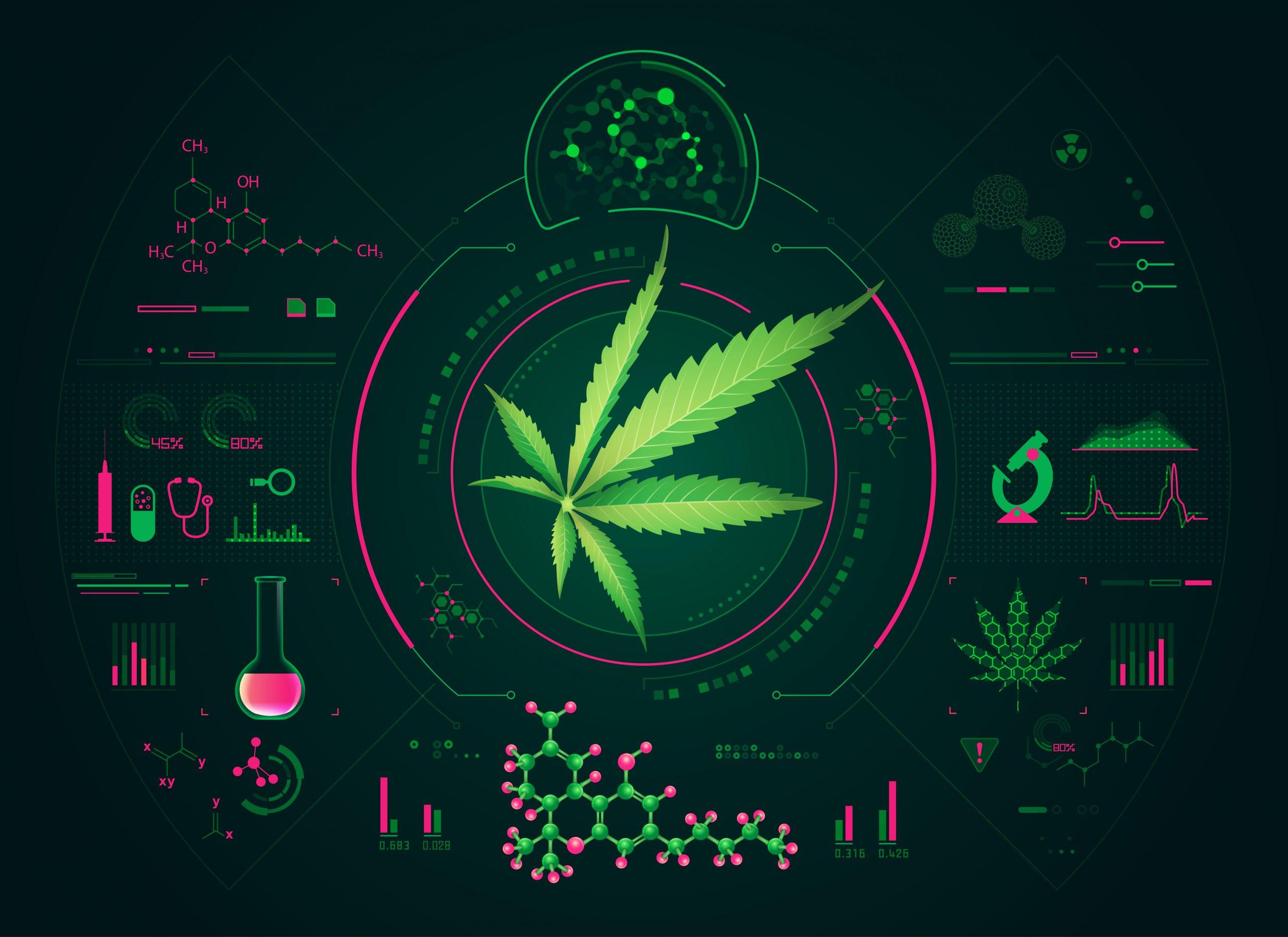 Cannabis leaf on digital background design